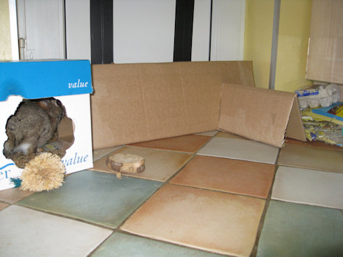 cardboard rabbit tunnel